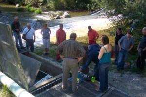 Group watching sockeye being tagged
