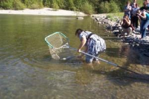 Debbie Miller releases first sockeye to Alouette Reservoir in over 80 years.