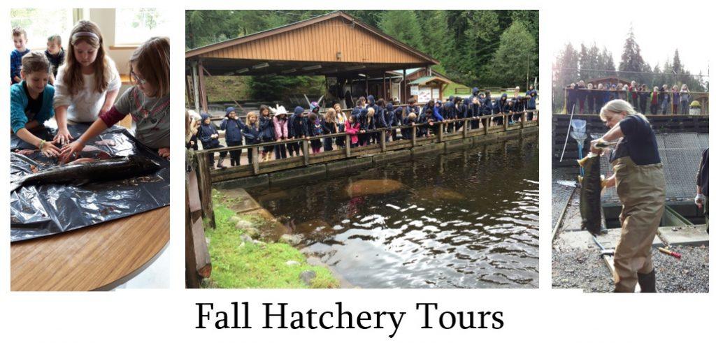 fall-hatchery-tours