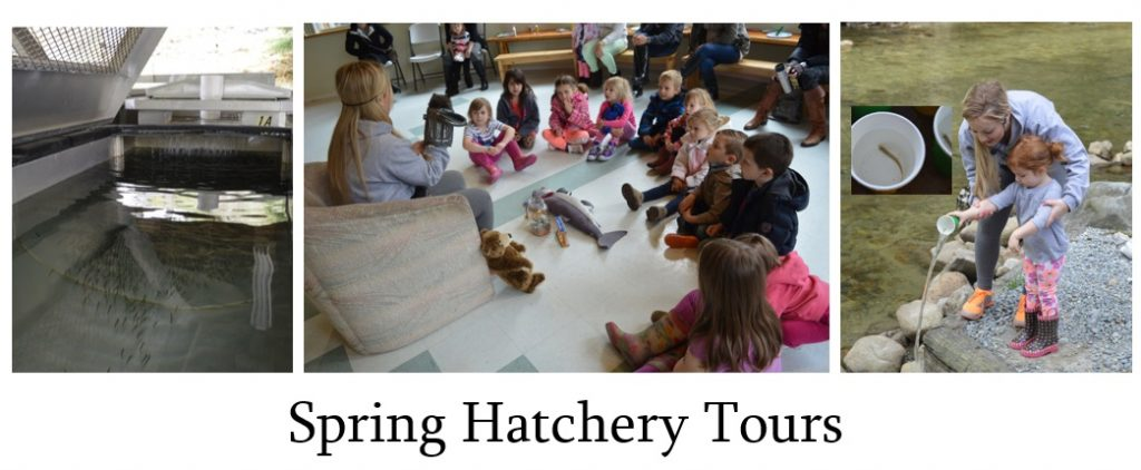 spring-hatchery-tours