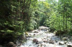 Cascade habitat in Moyer Creek. title=