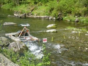 Rotary trap at mud creek