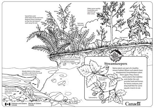 native aquatic plants